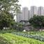 Hands on Urbanism 1850-2012. The Right to Green, Edited by Elke Krasny <br/> Architekturzentrum Wien 2012 II MCCM Creations ©