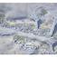 Parametric Urbanism Paolo Fusero, 3 | Ka-Care Masterplan, Carlo Ratti Associati